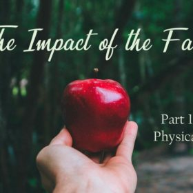 The Impact of the Fall – Part 1
